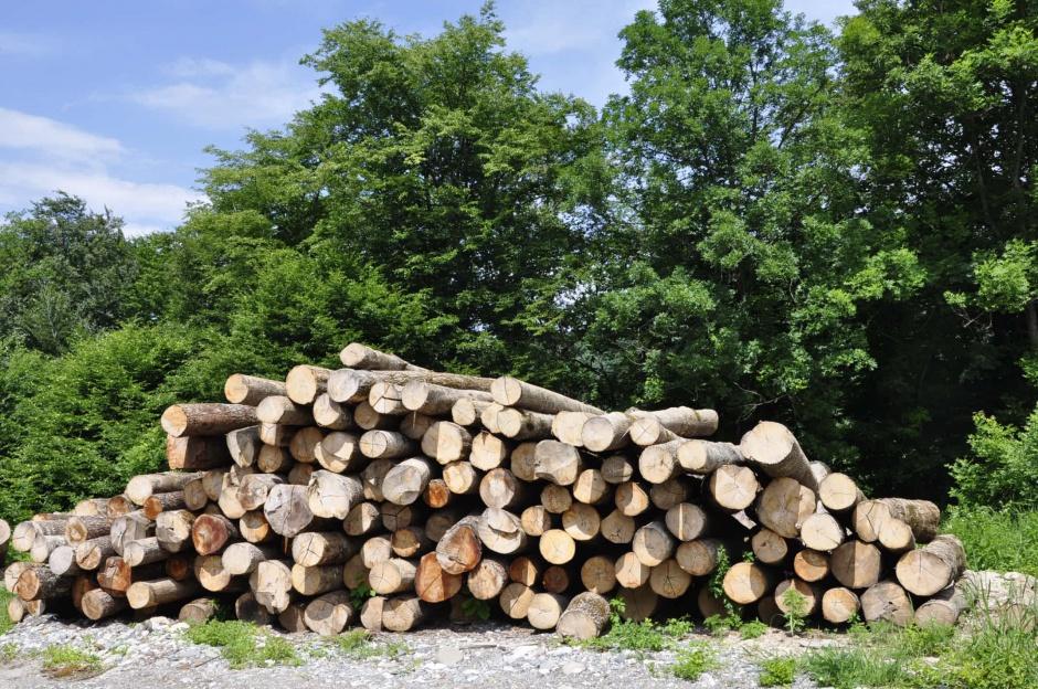 Картинки по запросу лесозаготовка